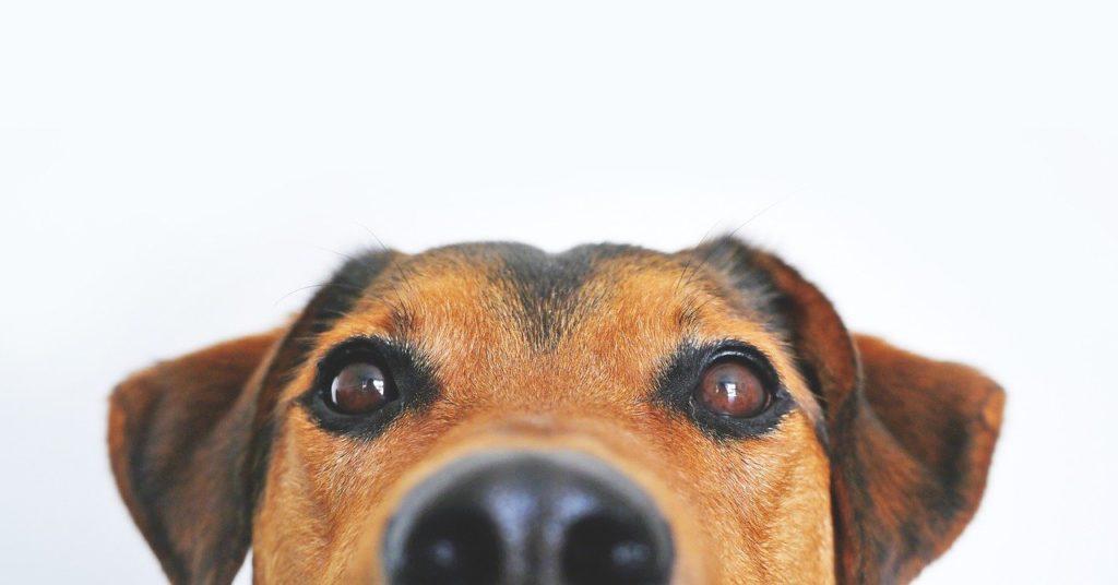 כלב על רקע לבן